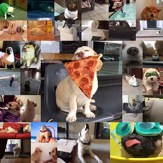 31-Dog-Vines-That'll-Make-You-Say-Me