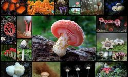 A-Fascinating-And-Colorful-World-Of-Mushrooms-(31-pics)---Izismile