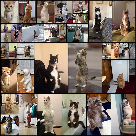 33-Cats-Awkwardly-Standing-Like-Humans-–-Pleated-Jeans