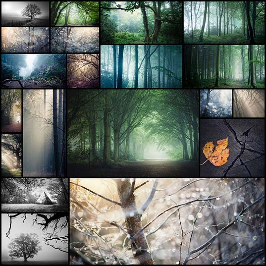 Beautiful-Photos-of-Trees-and-Woodlands-by-Matthew-Dartford