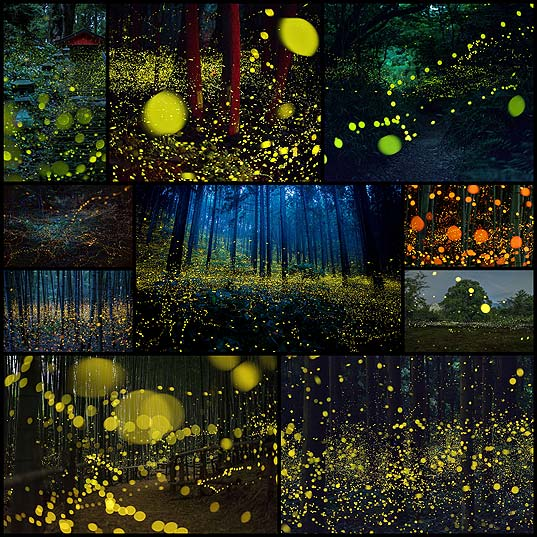 Surreal-Photos-Of-Fireflies-From-Japan's-2016-Summer--Bored-Panda