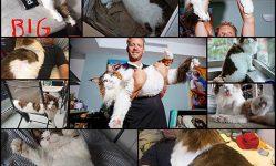 ニューヨークで最大の猫:13ポンドメインクーンサムソン