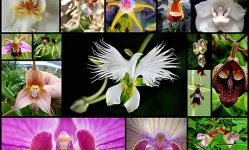 21完全に別の何かのように見て花の不思議な世界 - 私の近代メット