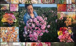 Photos Reveal the Abundance of Natural Beauty in the Life of a Dedicated Florist - My Modern Met
