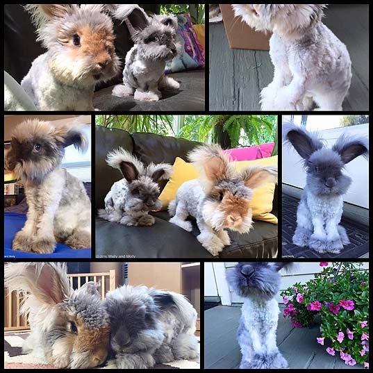 Famous-Fluffy-Eared-Rabbit-Has-a-New-Partner—And-She's-Just-as-Adorable---My-Modern-Met