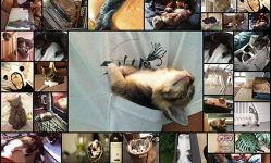 15-pics-that-prove-cats-can-sleep-purrretty-much-anywhere-bored-panda