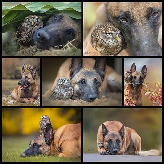 アメージング友達犬とフクロウ