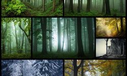 beautiful-wood-photography-thearthunters1