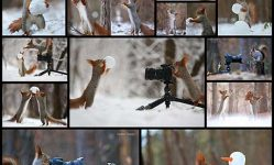 photographer-captures-the-cutest-funniest-squirrel-photo-session
