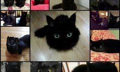 15黒猫 - 双子の竜Bezzubik_1