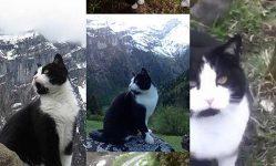 失われた観光客や猫救助の物語