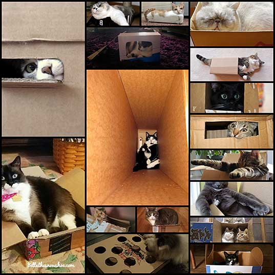 17-cats-living-their-dream-lives-in-boxes