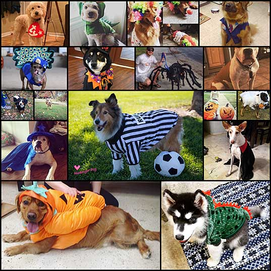 17-outrageously-cute-dog-halloween-costumes