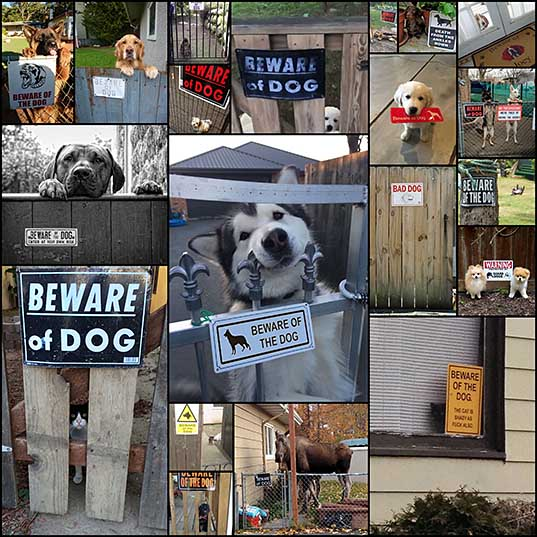 10-dangerous-dogs-behind-beware-of-dog-signs-bored-panda_1