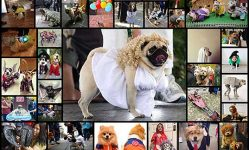 cool-dog-costume-ideas-for-halloween-56-pics-izismile