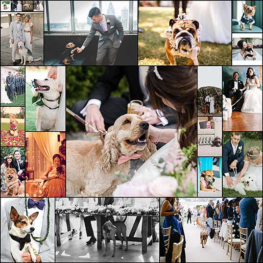 23-dogs-at-weddings-thatll-make-you-believe-in-love