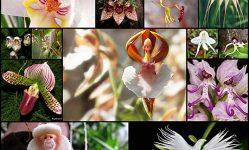 17-weird-looking-orchids-design-swan