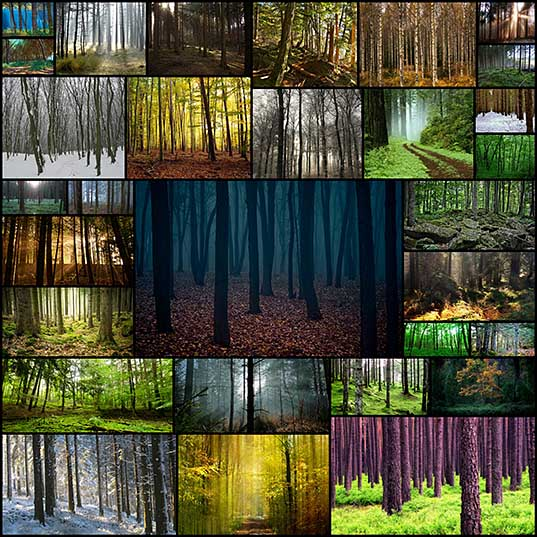 30-mystical-majestic-forest-photos-creativeoverflow