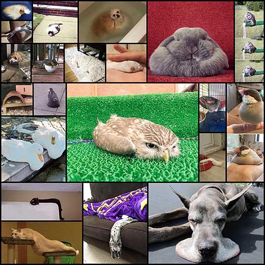 動物の賛成で21説得力のある引数 - 写真で液体•ニュース