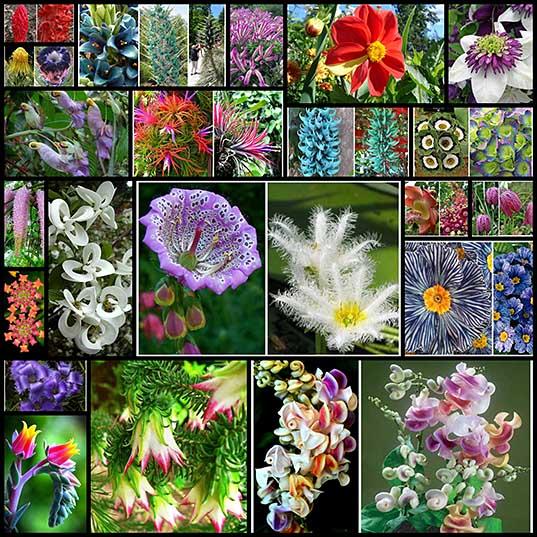 Субботняя встреча с природой - удивительные цветы