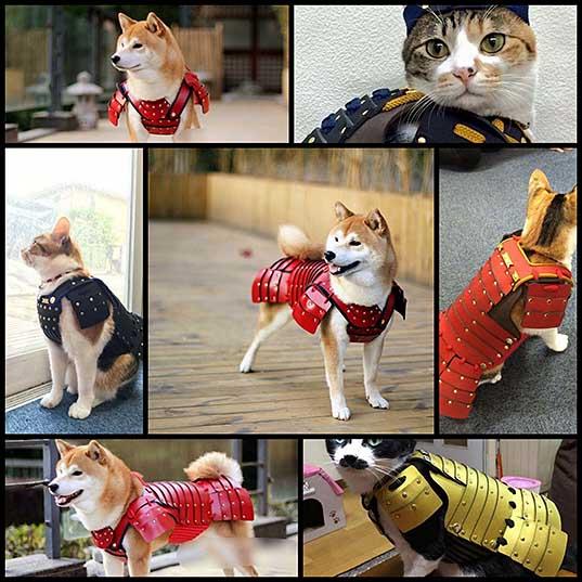 Одна компания из Японии создает самурайскую броню для кошек и собак