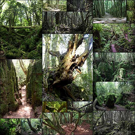 Puzzlewood – Tolkien's Inspiration for Middle-earth ~ Kuriositas