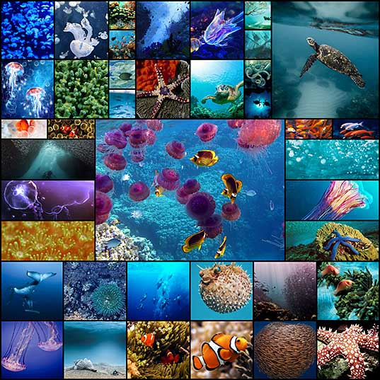 40 Picturesque and Beautiful Underwater Wallpapers - Hongkiat