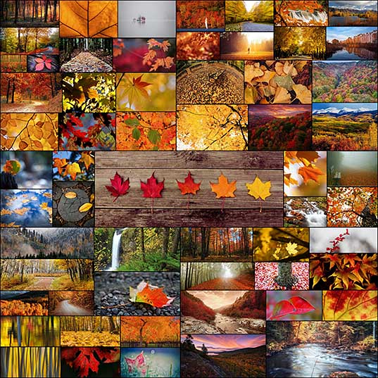 60 Breathtaking Fall Images for Your Inspiration - Fall Leaves