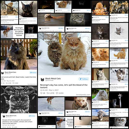 Twitter Account Pairs Cat Pics With Metal Lyrics And It's Just Perfect Bored Panda