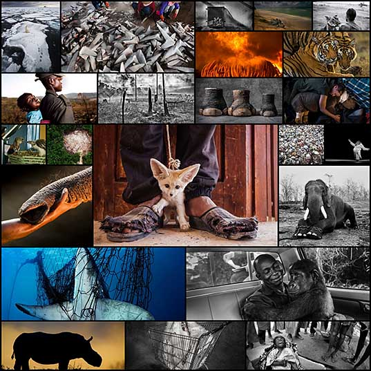 23 Heartbreaking Photos Brought Together In A Book To End The Illegal Wildlife Trade Bored Panda