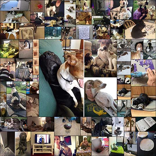 60+ Times Pets Were Total Jerks, But It Made Us Laugh Anyway (Add Yours!) Bored Panda