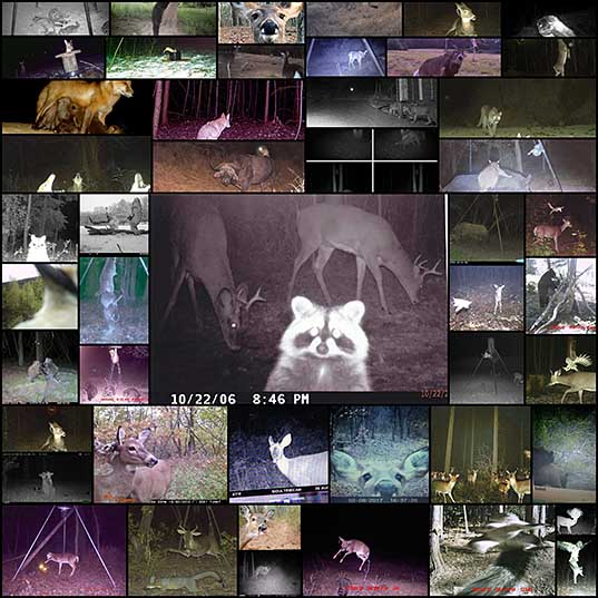 62 25+ Times Hidden Cams Revealed What Animals Do When Nobody Is Watching, And It Was Hilarious Bored Panda