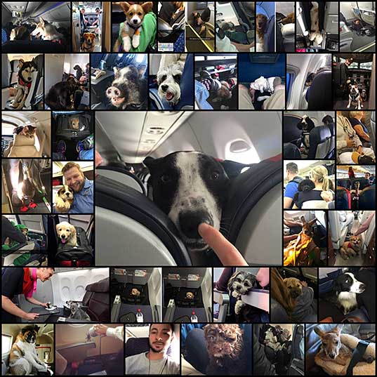 50+ Flights That Had The Best Passengers Bored Panda