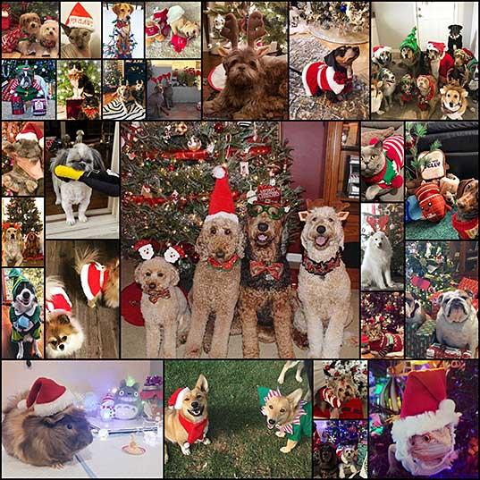 Праздник к нам приходит очаровательные питомцы в рождественских нарядах