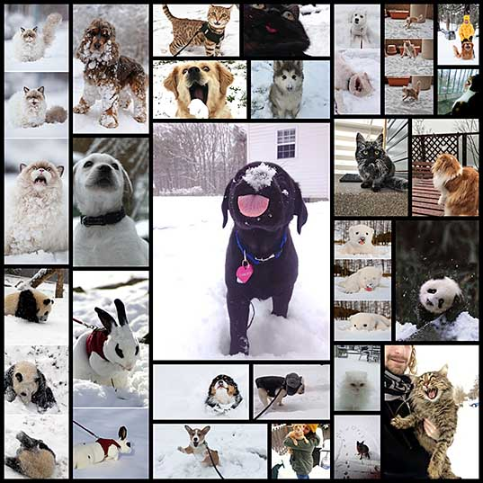 25+ Times Animals Experienced Snow For The First Time, And Their Faces Say It All Bored Panda