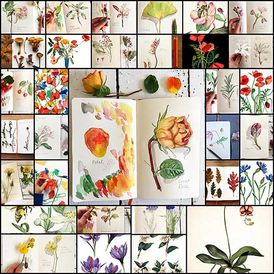 Artist Documents Plant Life with Daily Visual Diary of Botanical Illustrations