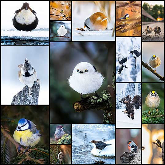 Finnish Photographer Shoots Real Life Angry Birds, And We Can't Finish Looking At Them Bored Panda_1