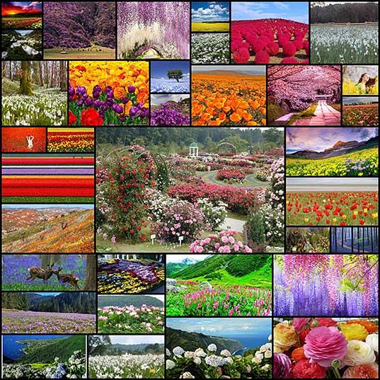 Цветочные туры мира - буйство красок и красоты