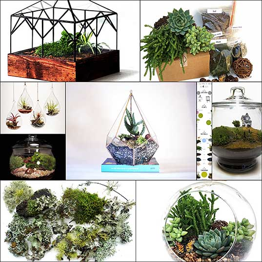 Learn How to Make a DIY Terrarium in 3 Easy Steps