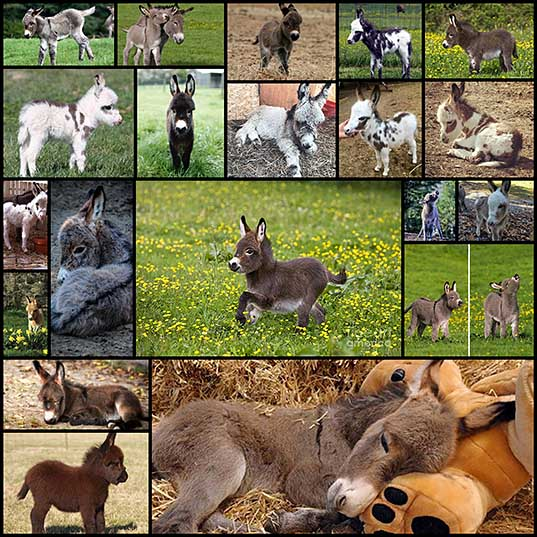 20 Adorable Photos of Baby Donkey – Design Swan