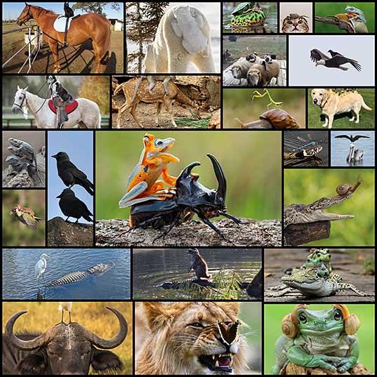 Весёлые фотографии с забавными животными, которые любят, чтобы их катали верхом