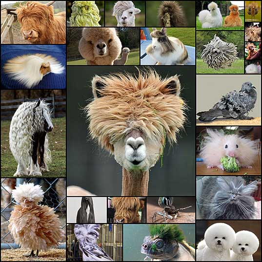 25 Animals Who Rock Their Glorious Hairstyles