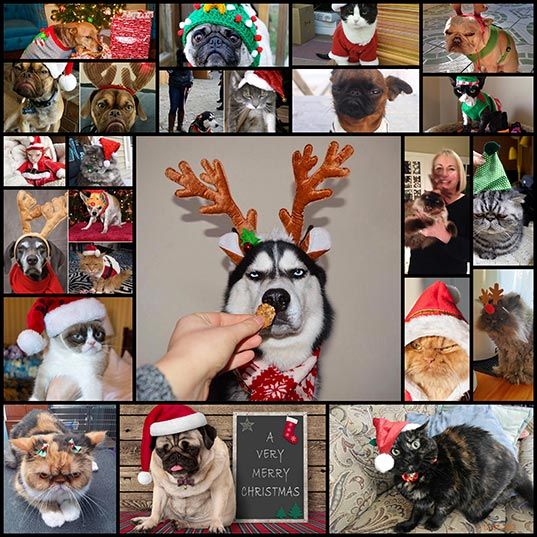 Pets-That-LOVE-Christmas-More-Than-Anything