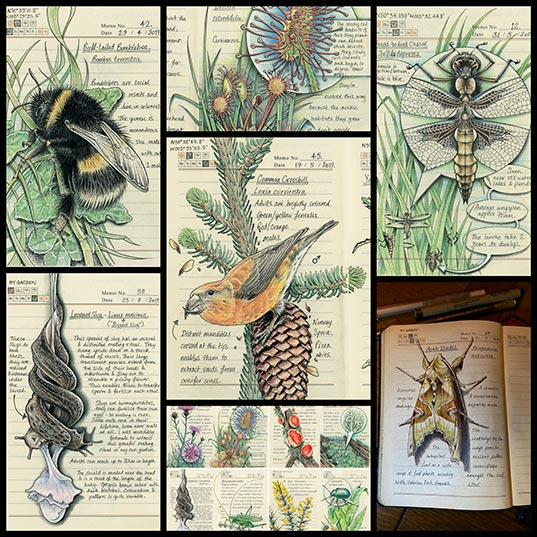 Meticulous-Illustrations-Document-the-Flora-and-Fauna-Observed-throughout-the-Devon-Countryside