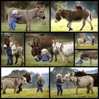 miniature-donkeys-are-the-best-friend-anyone-ever-had