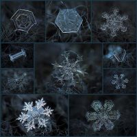 macro-close-ups-of-snowflakes-alexey-kljatov10