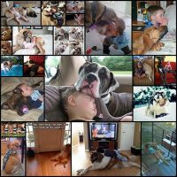 22-pictures-that-prove-dogs-are-a-kids-best-friend