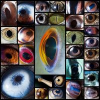 macro-photography-of-animal-eyes-suren-manvelyan30