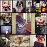 a-definitive-ranking-of-dogs-wearing-eyeglasses21