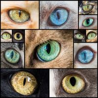 Mesmerizing-Macro-Photos-of-Cats'-Eyes-by-Andrew-Marttila---My-Modern-Met